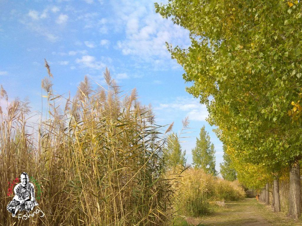 2018.10.07. Kunság-tava, Fegyvernek – Egy szép őszi nap, amikor (majdnem) minden összejön…